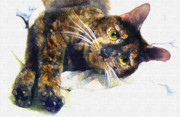 Tortie Prints - Contented Cat Print by Jane Schnetlage