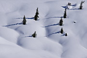 Snow Drifts Photos - Contours and Shadows by Sean Griffin