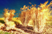 Fall Grass Prints - Contrasts Print by Michael Putnam