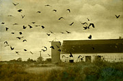 Old Barn Posters - Converged Poster by Gothicolors With Crows