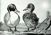 Wildlife Drawings Drawings Prints - Conversation between Feathered Friends Print by Cheryl Poland