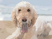 Golden Lab Paintings - Cool Down by Patti Siehien