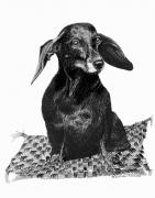 Drawings Of Dogs Prints - Cool Hot Dog Dog Print by Jack Pumphrey