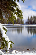 Snow Covered Pine Trees Prints - Cool Lakeside View Print by Chris Brannen