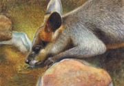 Kangaroo Paintings - Cool Relief by Karen Hull