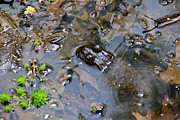 Frogs Photos - Cool Water by Extrospection Art