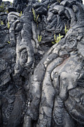 Hawai Posters - Cooled Pahoehoe Lava Poster by Tony Craddock