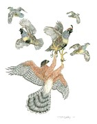 Glove Drawings Prints - Coopers Hawk and Gambels Quail Print by Tim McCarthy
