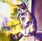 Sandra Phryce-Jones - Coops the Cat