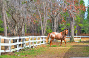 Broodmare Art - Coosaw - Outside the Fence by Scott Hansen