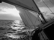 Black And White Framed Prints - Coquette Sailing Framed Print by Dustin K Ryan