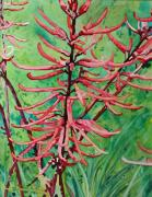 Terry Holliday - Coral Bean Flowers