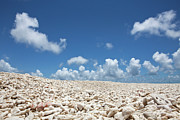 Barren Photos - Coral On A Beach by Caspar Benson