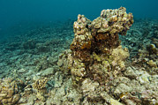 Coral Reefs Prints - Coral Reef Devastation Print by Matthew Oldfield