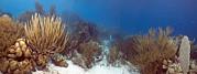 Coral Reef Print by Peter Scoones