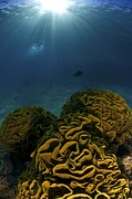 Deepsea Prints - Coral Reef, Red Sea Print by Photostock-israel