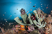 Featured Art - Coral Reef With Sponges And Mixed by Reinhard Dirscherl
