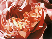 Botanical Paintings - Coral Rose by Sharon Von Ibsch