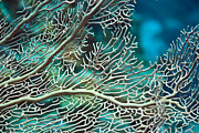 Under Water Prints - Coral texture Print by MotHaiBaPhoto Prints