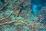 Coral Texture Print by MotHaiBaPhoto Prints