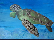 Green Sea Turtle Paintings - Coraling by Osee Koger