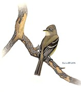 Flycatcher Drawings Prints - Cordilleran Flycatcher on snag Print by Kalen Malueg