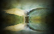 Layered Framed Prints - Corella Reflected Framed Print by Kym Clarke
