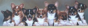 Puppies Metal Prints - Corgi Line Up Metal Print by Janet  Crawford