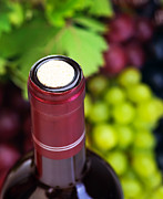 Grapevine Red Leaf Photo Prints - Cork of wine bottle  Print by Anna Omelchenko