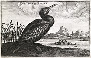 Embassy Prints - Cormorant, 17th Century Artwork Print by Middle Temple Library