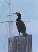 Carol Pastels - Cormorant Canvas Giclee Print by Carol Thompson