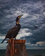 Chris Lord - Cormorant Couple