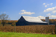 Tennessee Barn Prints - Corn Barn and Silo Print by Douglas Barnett