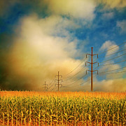 Electricity Posters - Corn Field At Sunrise Poster by Photo by Jim Norris