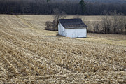 Tin Roof Prints - Corn Field Barn Print by John Stephens