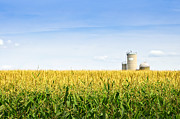 Yellow Prairie Photos - Corn field with silos by Elena Elisseeva