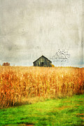 Haunted Barn Photos - Corn Fields of Kentucky by Darren Fisher