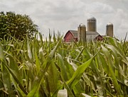 Cornfield Photos - Corn Is High by Odd Jeppesen