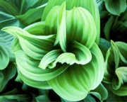 Green Reliefs Metal Prints - Corn Lily Metal Print by Joe  Palermo