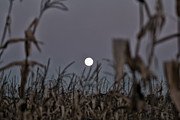 Cornfield Photos - Corn Moon Rising by Purcell Pictures