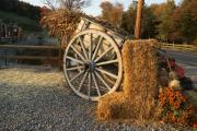 Corn Wagon Framed Prints - Corn Stalks and Hay Bales Framed Print by Margie Avellino