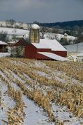 Pennsylvania Barns Photos - Corn Stubble And Barn In A Wintery by Raymond Gehman