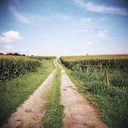 Dirt Road Posters - Cornfield After Harvest Poster by Pam Ullman