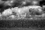 Cornfield Photos - Cornfield and Clouds by Robert Ullmann