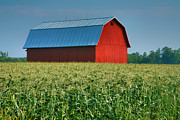 Barn Print Framed Prints - Cornfield and Red Barn Framed Print by Steven Ainsworth