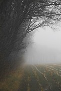 Cornfield Photos - Cornfield In The Mist by Odd Jeppesen