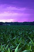 Cornfield Framed Prints - Cornfield Landscapes Purple Rain Framed Print by Cathy  Beharriell