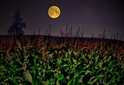 Country Scenes Metal Prints - Cornfield Moon Tree Metal Print by Emily Stauring