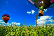 Bright Sky Prints - Cornfield View Hot Air Balloons Print by Bob Orsillo