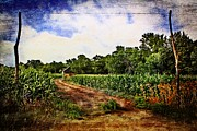 Cornfield Photos - Cornfields and Dirt Roads 2 by Sharlotte Hughes